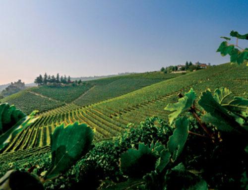Un sorso che ti restituisce terra e storie, le più nobili – Azienda Agricola Damilano