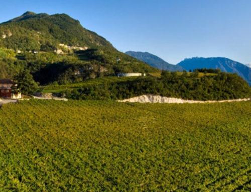 La gestione dei processi produttivi in cantina – Moser Trento